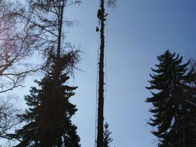 wycinanie drzew katowice