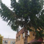 wycięcie drzewa katowice
