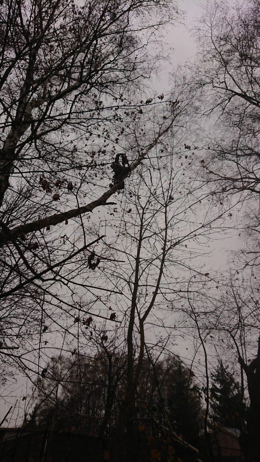 wycinanie drzewa katowice