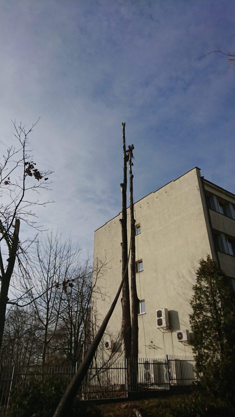wycinanie drzew śląsk